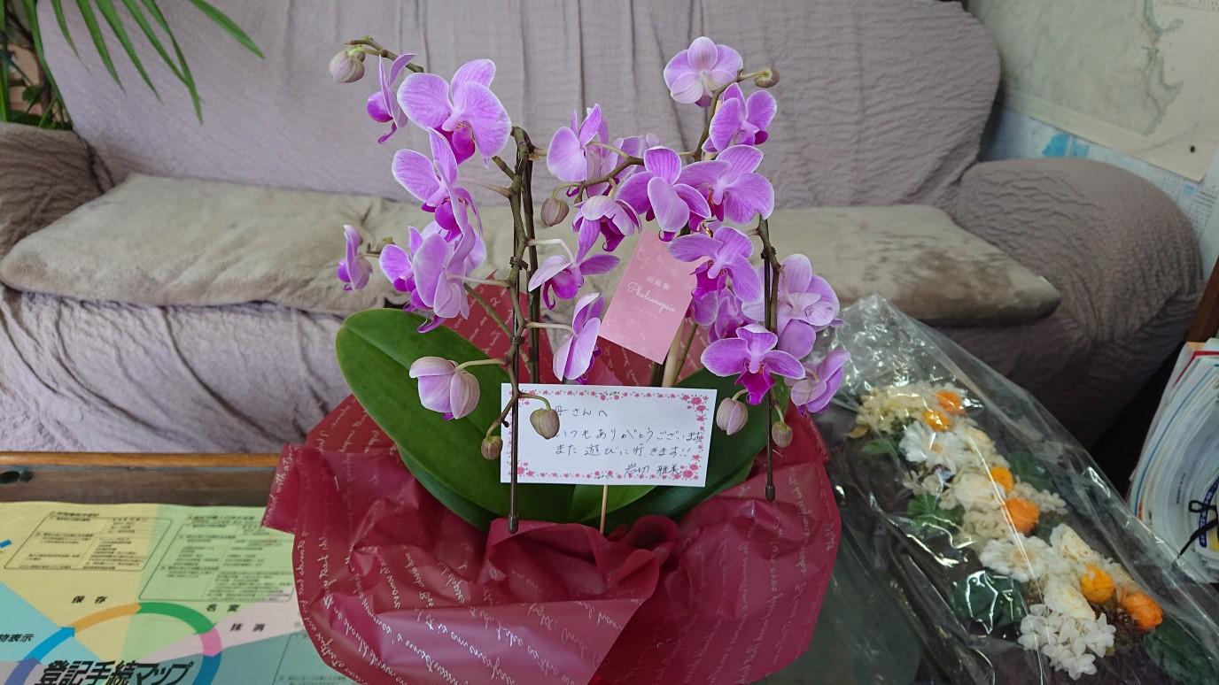 母の日の花が届きました!!